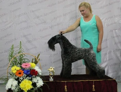 FCI group III - Winners CACIB «Friendship Cup - 2015» + mono-breed shows, Tyumen 4-5 July 2015